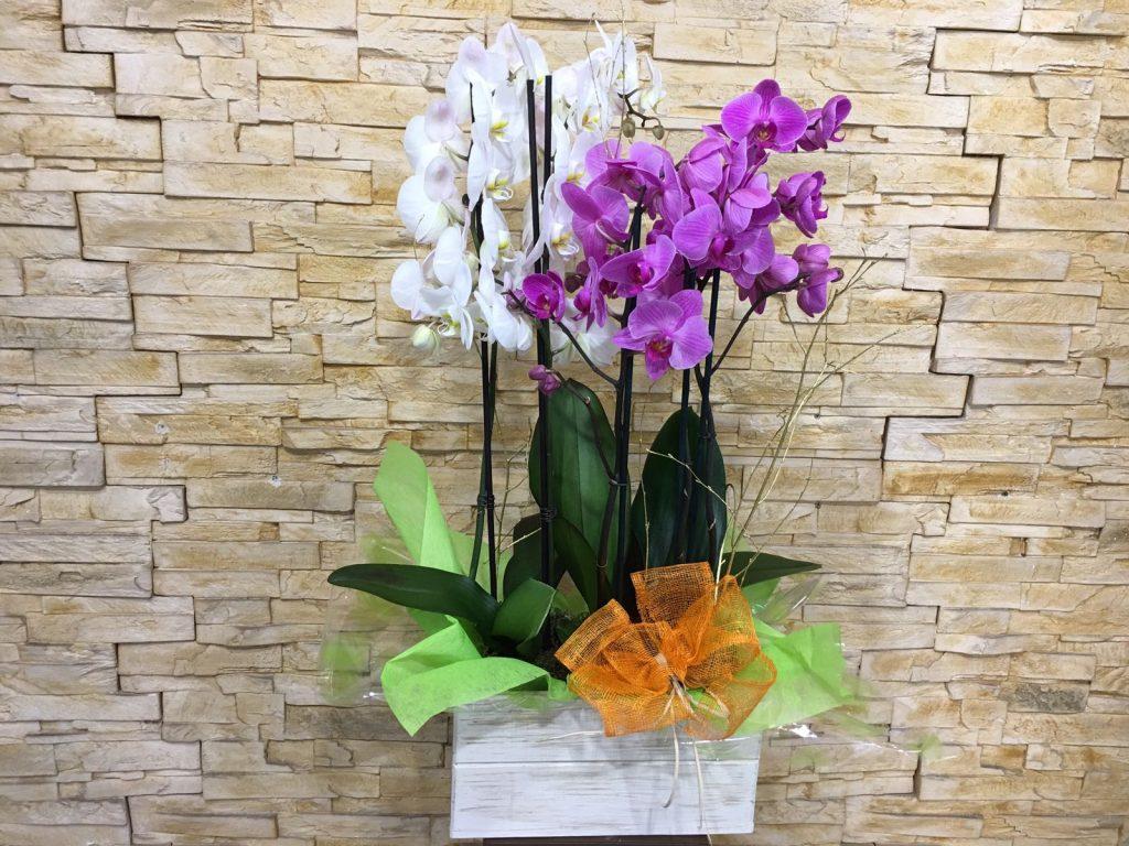 Orquídeas floristería Madrid, El jardín de la abuela, floristería Madrid centro