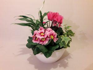 centro de plantas el jardín de la abuela, floristería Madrid Arguelles, flores moncloa aravaca