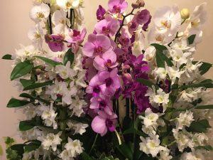 comprar orquídeas en argüelles
