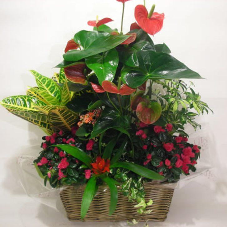 cestas de plantas en argüelles